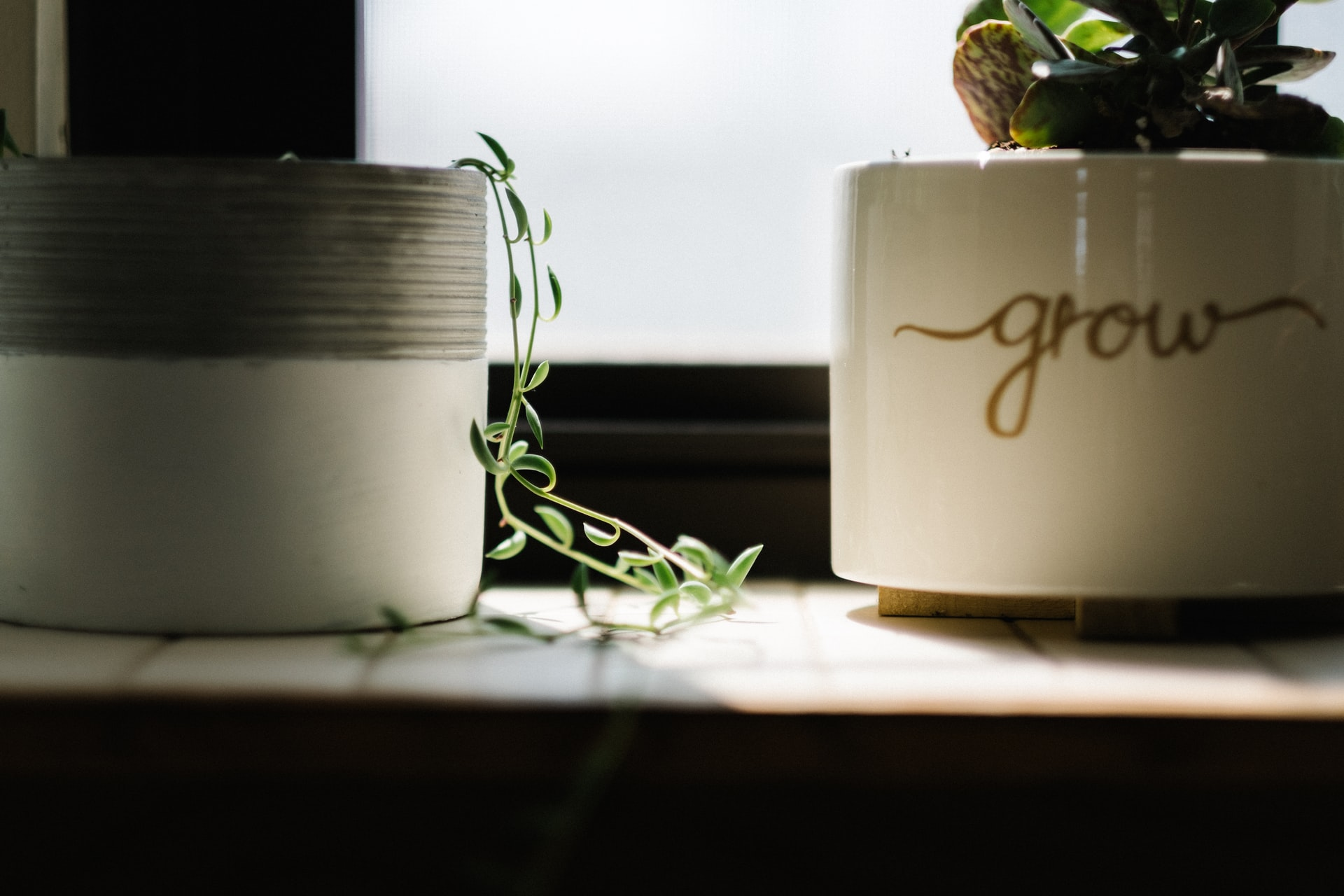 "A potted plant with the word ""grow"" on the ceramic pot"